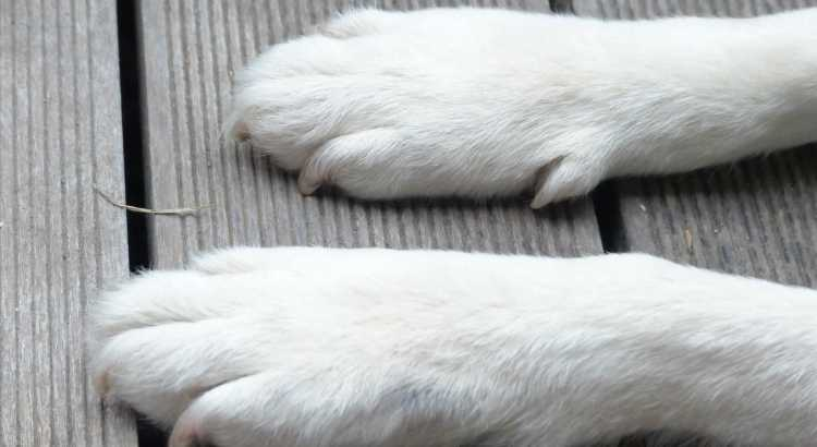 Protect your dog's paws from winter & snow