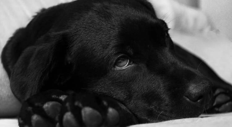 krebs bei hunden was hilft wirklich tractive blog hundeortung sicherheit f r haustiere. Black Bedroom Furniture Sets. Home Design Ideas