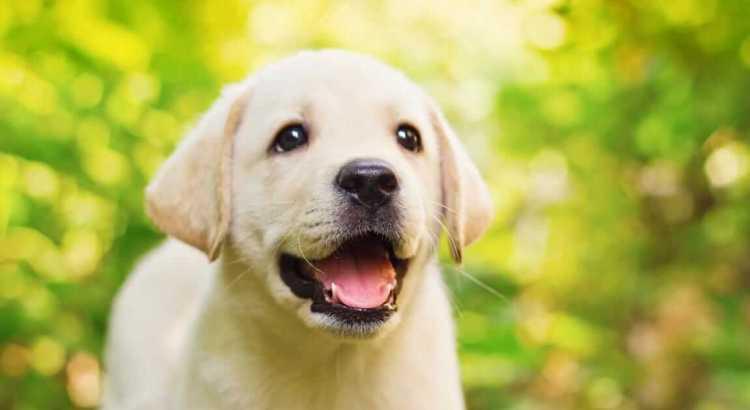 Accogliere un cucciolo in famiglia