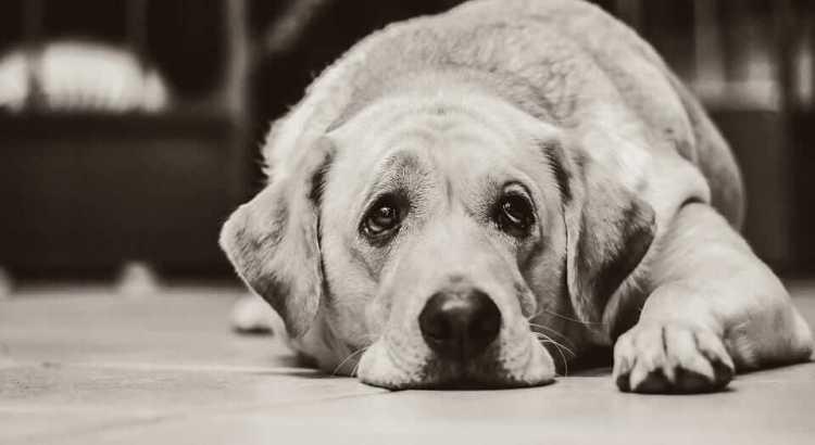 Ileus in dogs