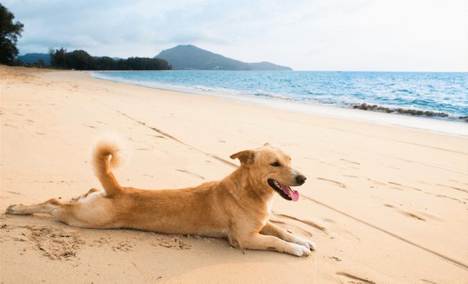 Hitzschlag beim Hund
