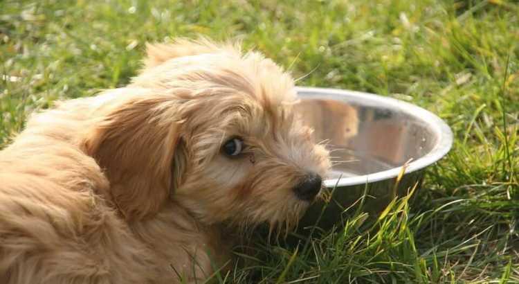 Hund trinkt nichts