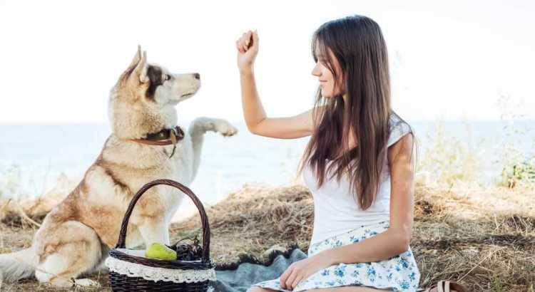 Alimentare bene il cane d'estate