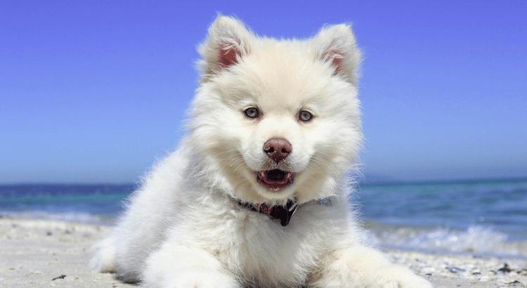 Prima delle vacanze con il cane al mare: 5 consigli
