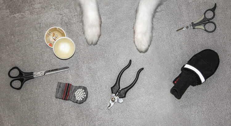 paw care