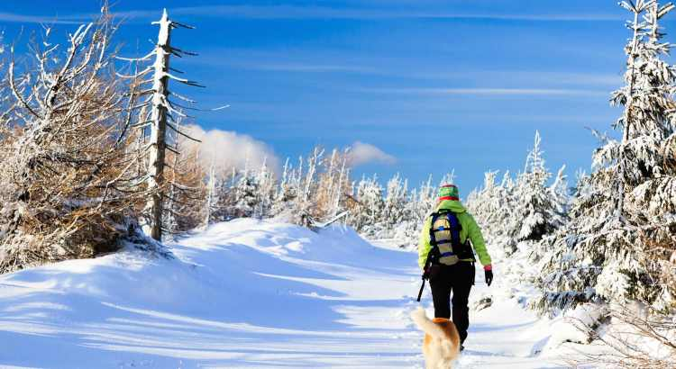 Urlaub mit Hund im Winter