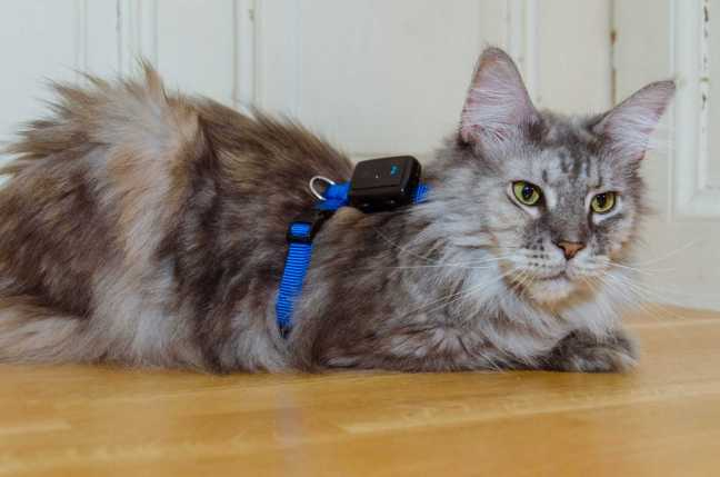 Tractive GPS for cats: shooting with Roxy