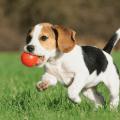 Abituare i cuccioli al gioco