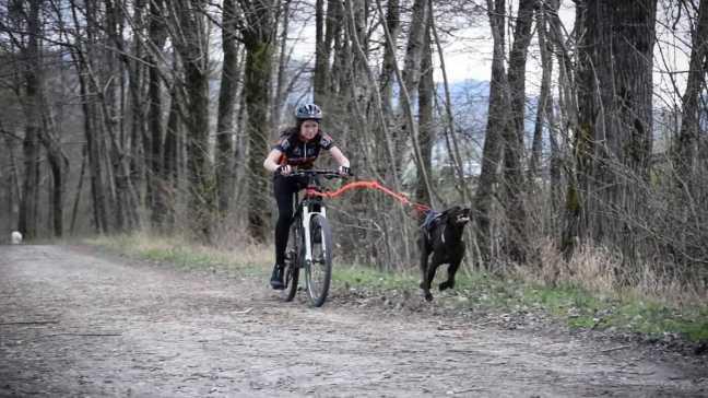 in bici col cane 2