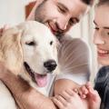 glücklicher hund