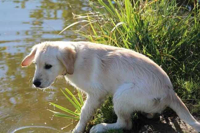 Dog Breeds Afraid Of Water