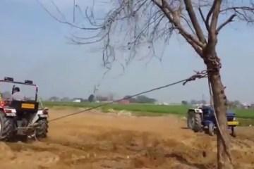 Tracteur versus un arbre qui l'emporte