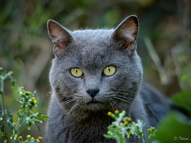 The News Hub - cat outdoors