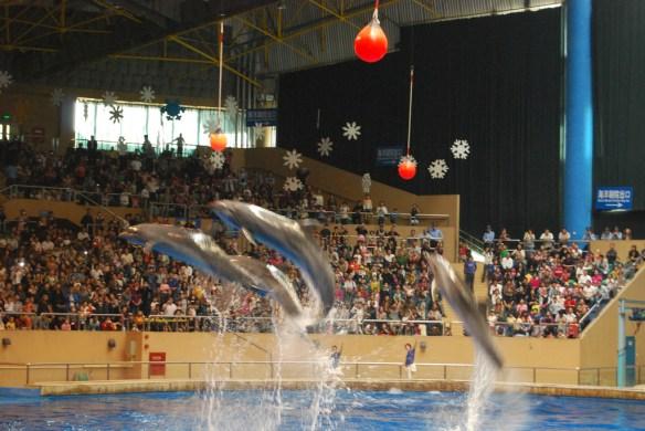 Beijing Aquarium dolphins