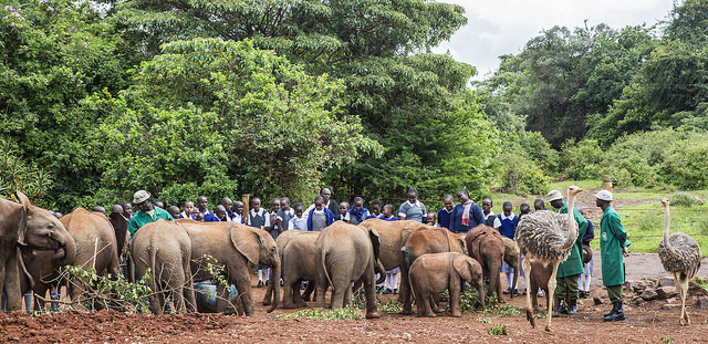 DSWT outreach