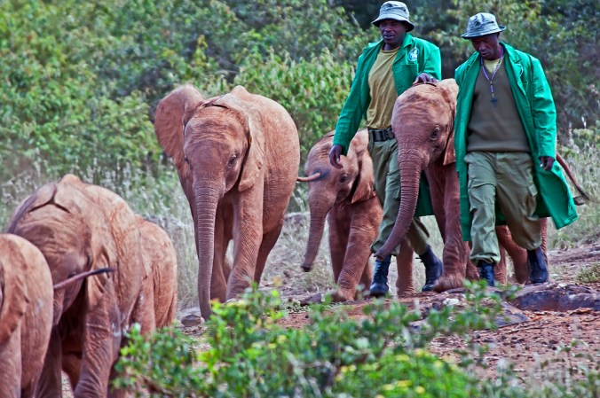 elephant orphans bush walk