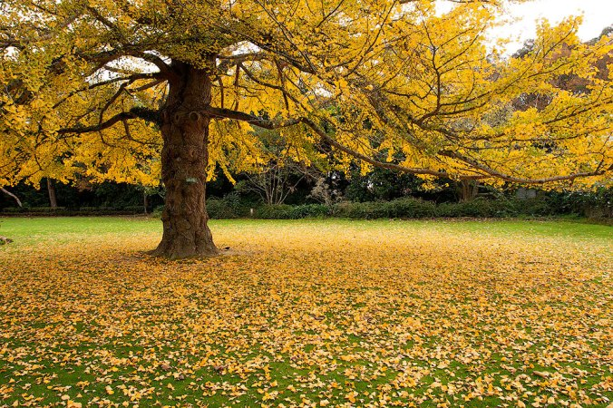 Autumn tree for respite in nature