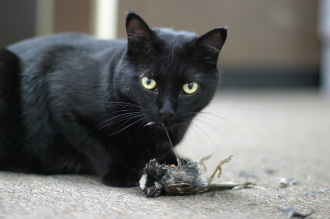 Cat with sparrow