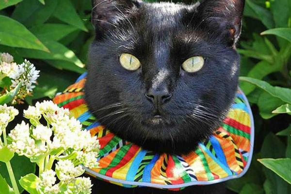 Cat wearing Birdsbesafe collar