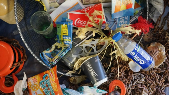 Plastic waste washes up on beaches and injures ocean wildlife