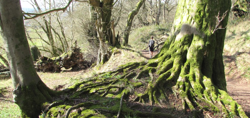 Machen to Castell Coch … and back (a 20-mile circular)