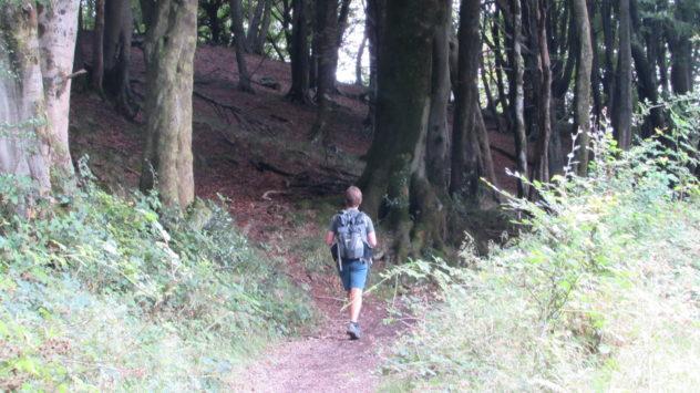 Harri Garrod Roberts, woods at Cefn Onn, Rhymney Valley, Caerphilly
