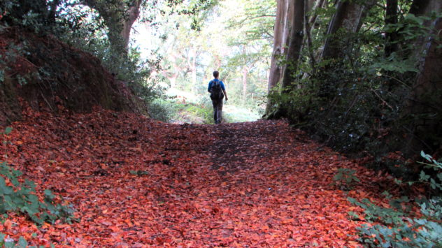 Footpath between Porlock and Porlock Weir, Exmoor National Park