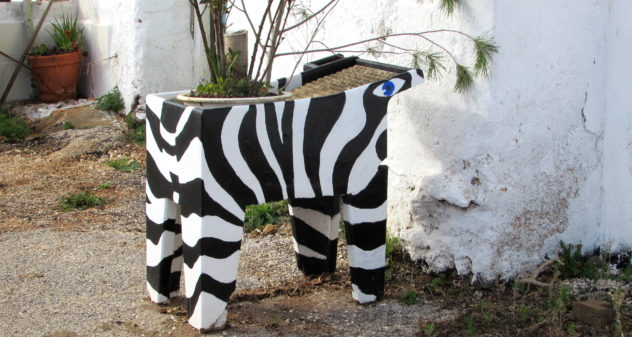 Zebra planter, Colégio, Algarve