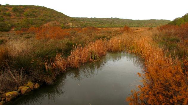 Budens Marsh, near Salema, Western Algarve, Portugal