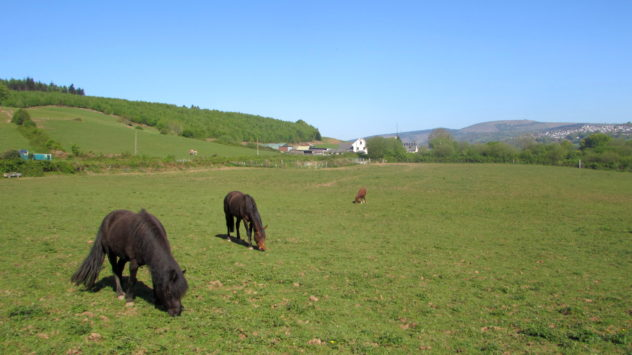 Horses in Rhiwderin, Newport, South Wales, UK