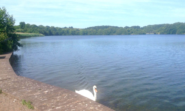 Cosmeston Lakes, Vale of Glamorgan, South Wales