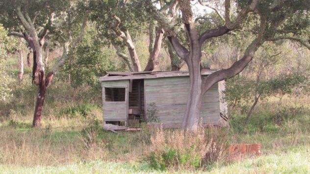 Ramshackle shed near São Marcos da Serra