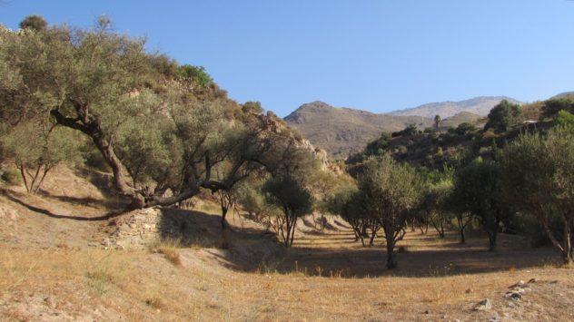 Guadalfeo valley, Orgiva, Alpujarras, Andalusia