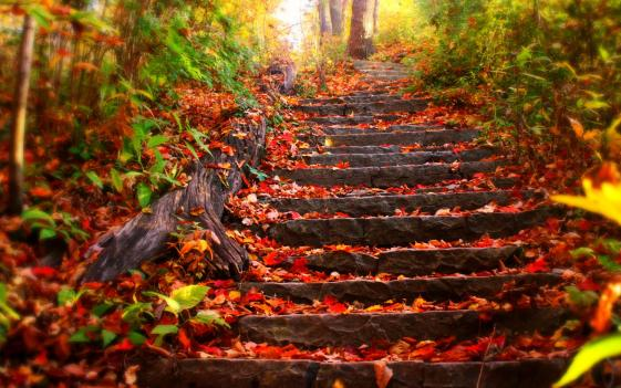 Autumn-Leaves-Images