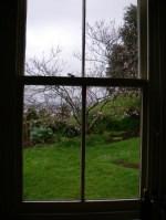 Spring rain, blossoms, kitchen window