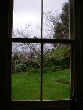 Spring rain, blossoms, kitchen window