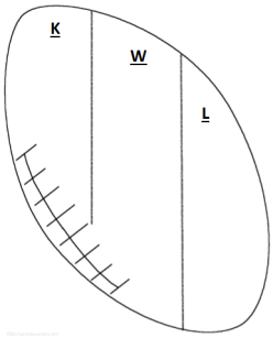 KWL chart in football shape -free pdf