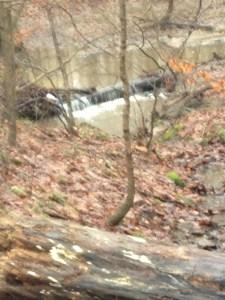 walk in the woods 1-12-2013 002