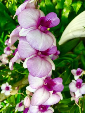 orchid 12
