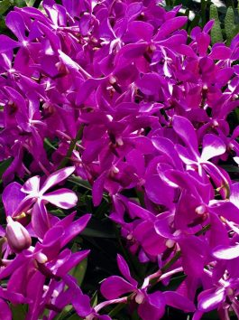 orchid 19