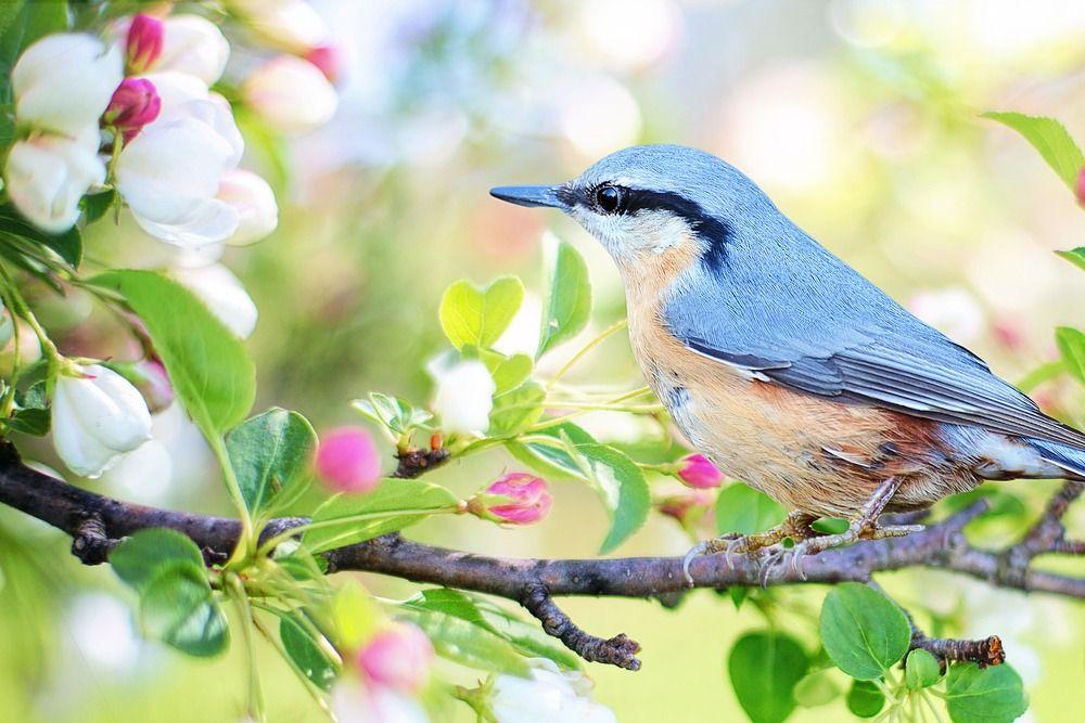 誕生鳥・バースデイ バードと鳥言葉 一覧