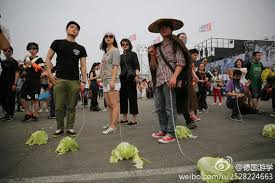 CHINA FOCUS : WALKING CABBAGES