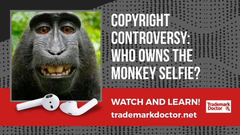 Copyright Case Study: Who Owns The Monkey Selfie?