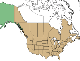 elderberry map showing the North American areas this native plant family can be found