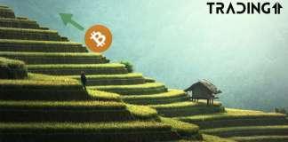 Bitcoin, btc, up