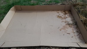 cardboard weed blocker