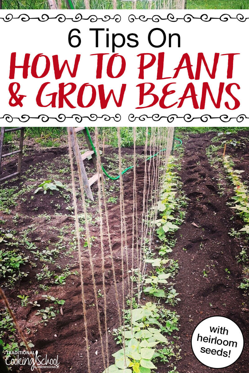 6 tips for growing planting beans if i had to choose one vegetable to