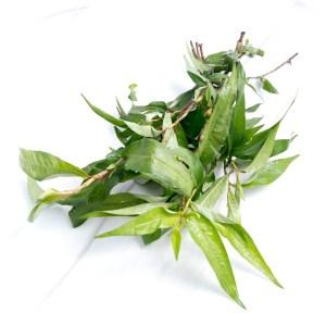 Vietnamese mint (ผักแพว)