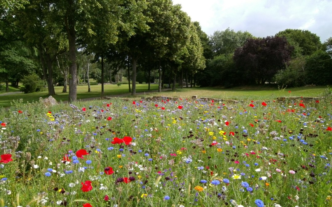 Wellbeing Wednesday – Nature Nutures