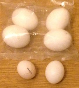 Comparison of egg sizes